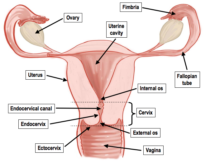 Exams Reproductive Systems